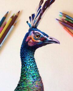 نقاشی حیوانات با مداد رنگی، طاووس؛ هنرمند: Morgan Davidson