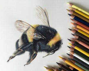 نقاشی حیوانات با مداد رنگی، زنبور؛ هنرمند Paul Miller