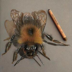 نقاشی حیوانات با مداد رنگی، مگس؛ هنرمند Paul Miller