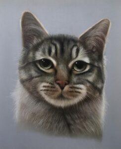 نقاشی حیوانات با مداد رنگی، گربه؛ هنرمند Paul Miller