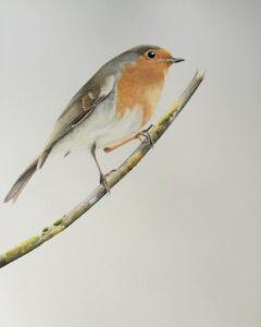 نقاشی حیوانات با مداد رنگی، پرنده؛ هنرمند Paul Miller