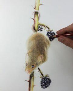 نقاشی حیوانات با مداد رنگی، موش؛ هنرمند Paul Miller
