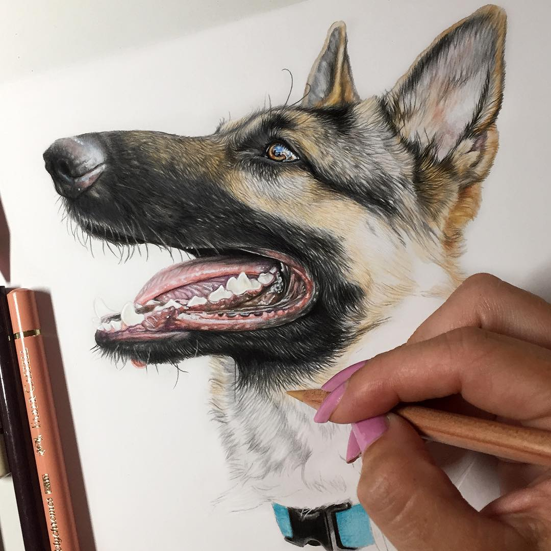 نقاشی سگ با مداد رنگی