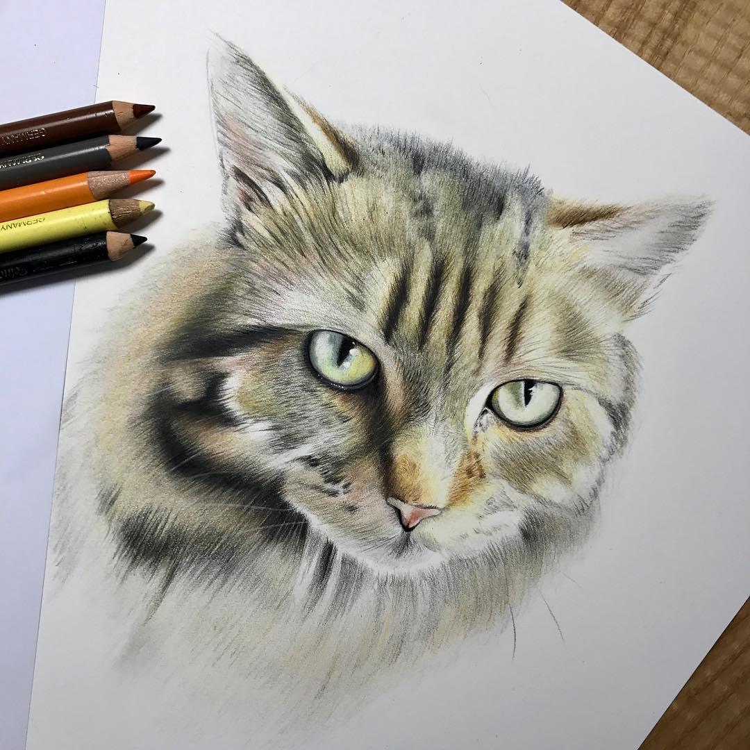 نقاشی گربه با مداد رنگی