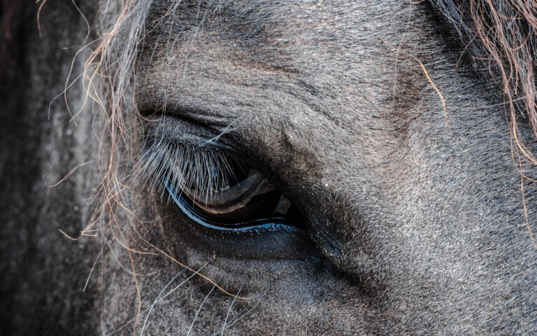 چشم اسب