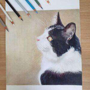 نقاشی گربه سفید و سیاه با استفاده از مداد رنگی