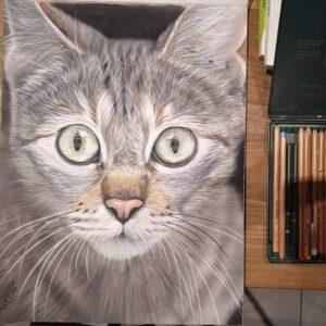 نقاشی صورت گربه سفید و خاکستری با استفاده از مداد رنگی