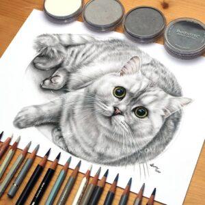 نقاشی گربه سفید و خاکستری با استفاده از مداد رنگی