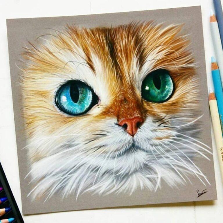 نقاشی صورت گربه سفید و حنایی با استفاده از مداد رنگی