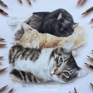 نقاشی گربه با استفاده از مداد رنگی