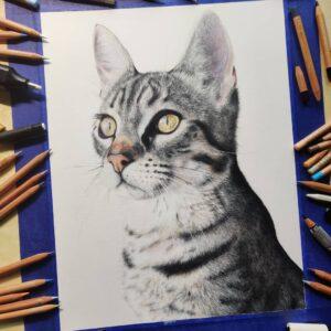 نقاشی گربه با استفاده از مداد رنگی و چشمهای پر از جزئیات آن
