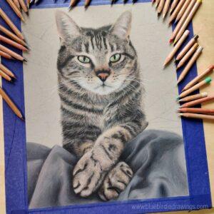 نقاشی صورت و دستهای گربه