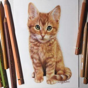 نقاشی بچه گربه حنایی با استفاده از مداد رنگی