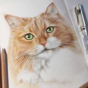 نقاشی صورت گربه حنایی و سفید با استفاده از مداد رنگی