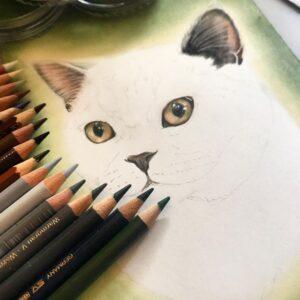 نقاشی صورت گربه سفید با استفاده از مداد رنگی