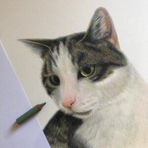 نقاشی صورت گربه با استفاده از مداد رنگی