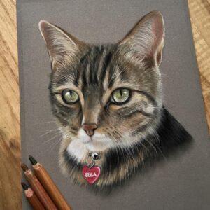 نقاشی صورت گربه با استفاده از مداد رنگی مارک فابر کاستل پلی کروم