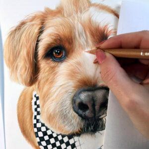 نقاشی چهره سگ سفید و قهوهای با استفاده از مداد رنگی