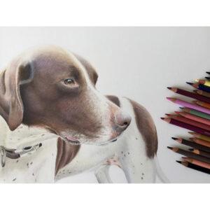 نقاشی سگ سفید و قهوهای با استفاده از مداد رنگی