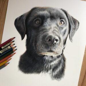 نقاشی چهره سگ سیاه با استفاده از مداد رنگی