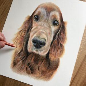 نقاشی چهره سگ با استفاده از مداد رنگی