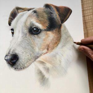 نقاشی سفید و حنایی چهره سگ با استفاده از مداد رنگی